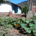 horta da fazenda